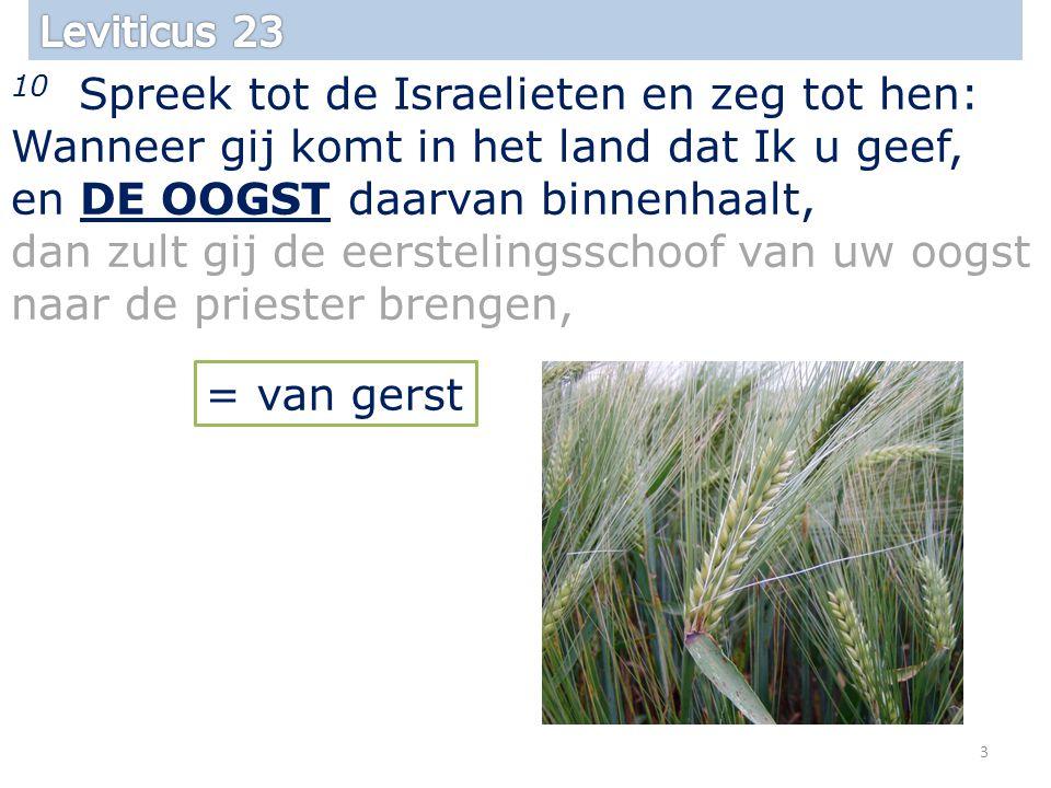 10 Spreek tot de Israelieten en zeg tot hen: Wanneer gij komt in het land dat Ik u geef, en DE OOGST daarvan binnenhaalt, dan zult gij de eerstelingsschoof van uw oogst naar de priester brengen, 3 = van gerst