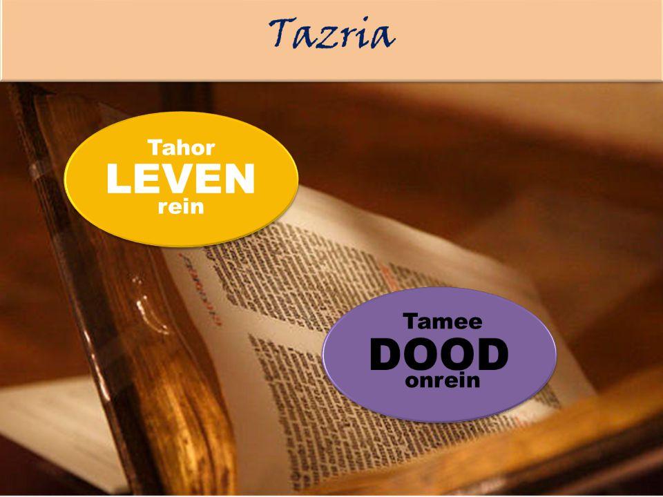 Tamee onrein Tahor rein