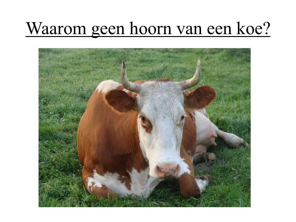 Waarom geen hoorn van een koe?