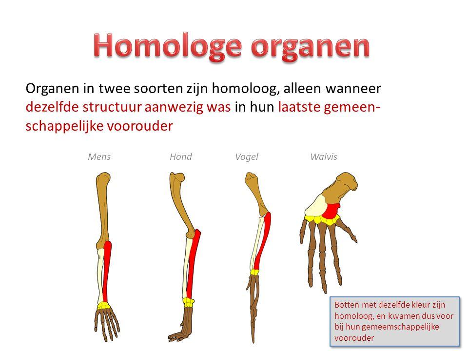 Organen in twee soorten zijn homoloog, alleen wanneer dezelfde structuur aanwezig was in hun laatste gemeen- schappelijke voorouder Mens Hond Vogel Wa