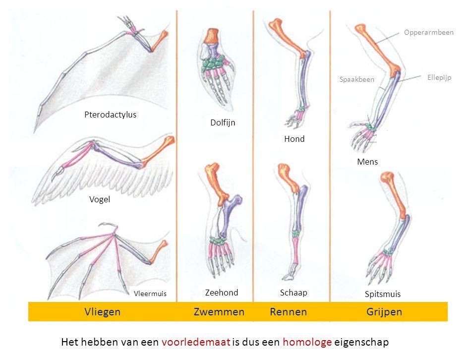 Vliegen Zwemmen Rennen Grijpen Pterodactylus Vogel Vleermuis Spitsmuis Mens Schaap Hond Zeehond Dolfijn Opperarmbeen Ellepijp Spaakbeen Het hebben van een voorledemaat is dus een homologe eigenschap