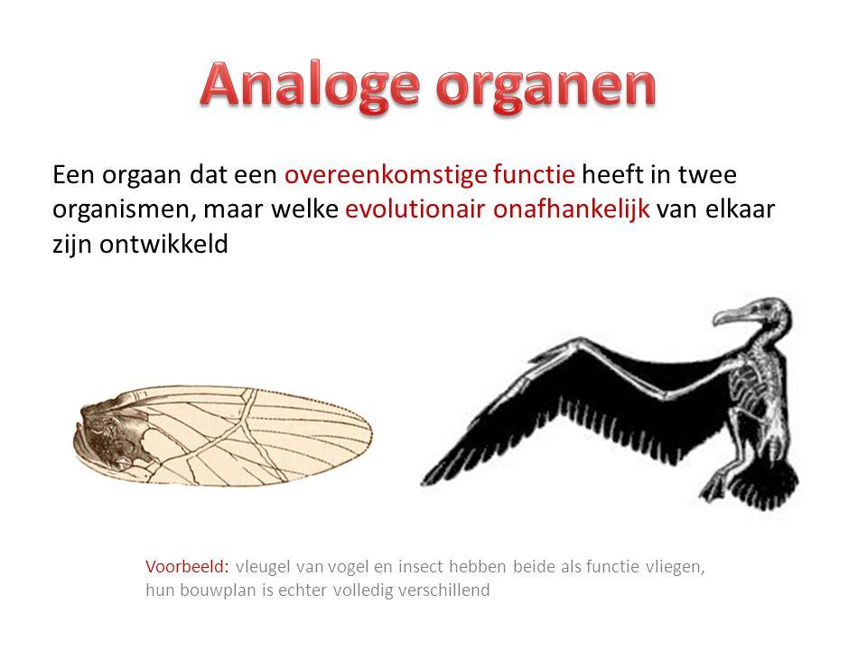 Een orgaan dat een overeenkomstige functie heeft in twee organismen, maar welke evolutionair onafhankelijk van elkaar zijn ontwikkeld Voorbeeld: vleugel van vogel en insect hebben beide als functie vliegen, hun bouwplan is echter volledig verschillend
