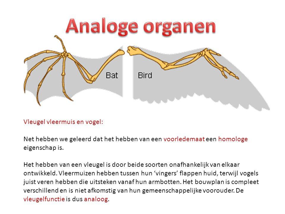 Vleugel vleermuis en vogel: Net hebben we geleerd dat het hebben van een voorledemaat een homologe eigenschap is. Het hebben van een vleugel is door b