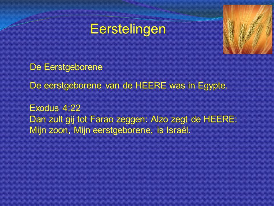 De Eerstgeborene De eerstgeborene van de HEERE was in Egypte. Exodus 4:22 Dan zult gij tot Farao zeggen: Alzo zegt de HEERE: Mijn zoon, Mijn eerstgebo