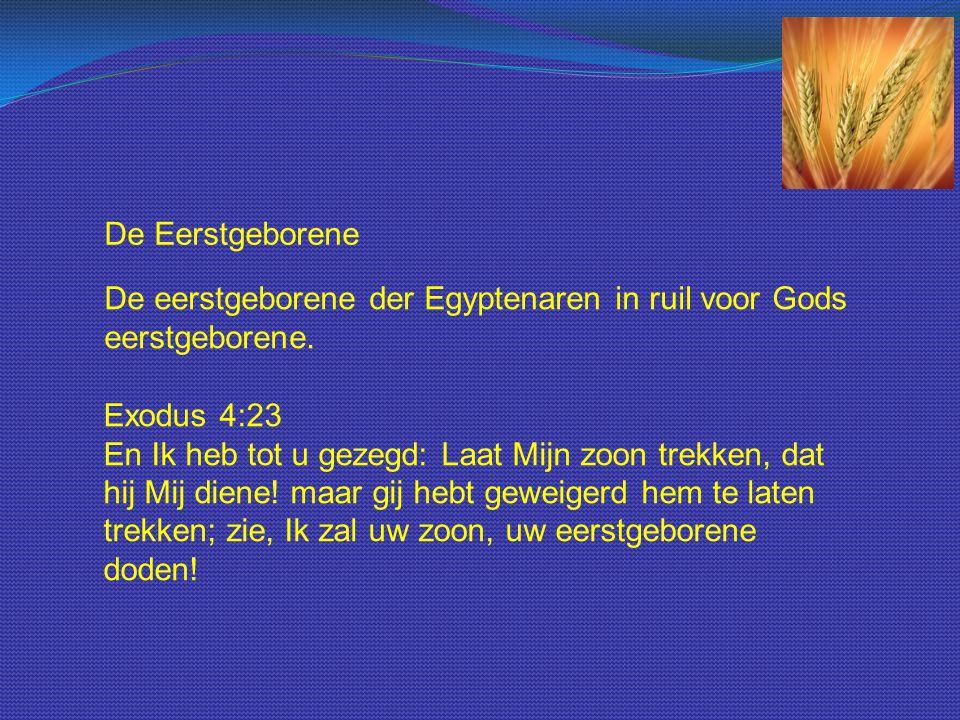 De Eerstgeborene De eerstgeborene der Egyptenaren in ruil voor Gods eerstgeborene. Exodus 4:23 En Ik heb tot u gezegd: Laat Mijn zoon trekken, dat hij