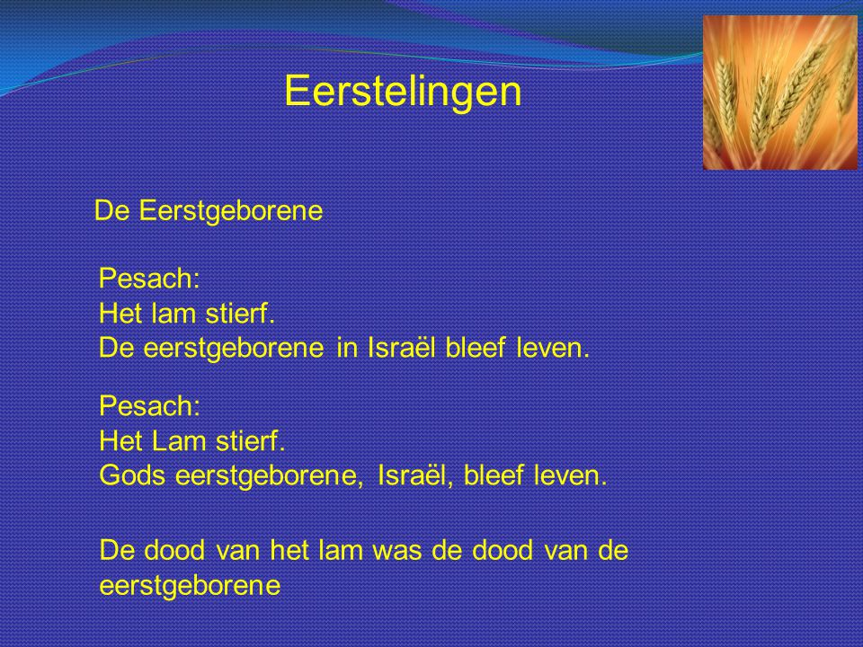 De Eerstgeborene Pesach: Het lam stierf. De eerstgeborene in Israël bleef leven. Pesach: Het Lam stierf. Gods eerstgeborene, Israël, bleef leven. De d