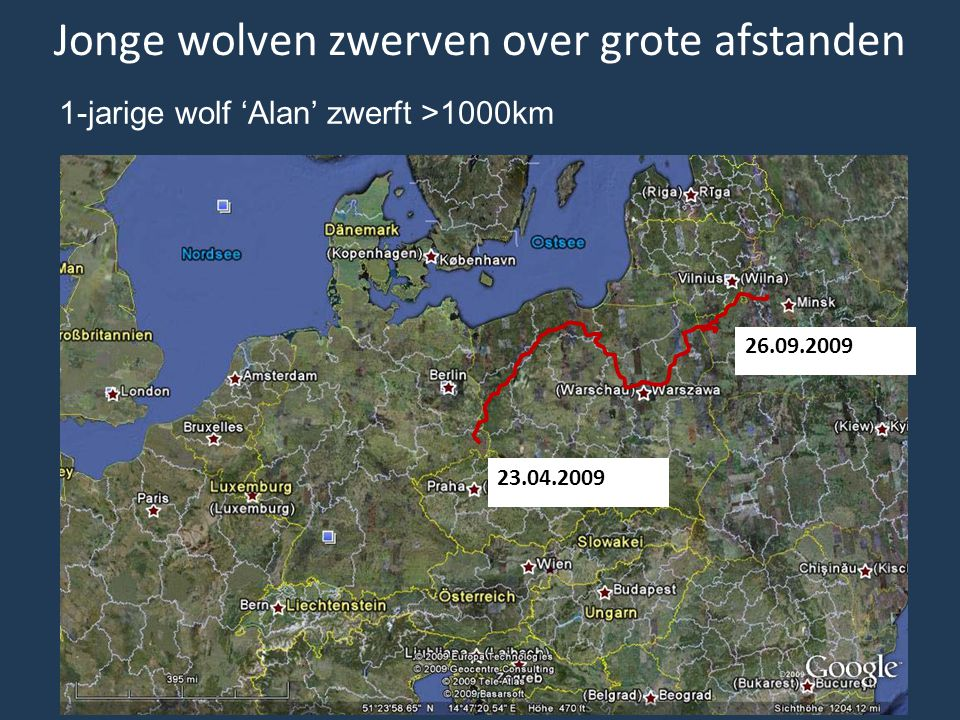 Jonge wolven zwerven over grote afstanden 1-jarige wolf 'Alan' zwerft >1000km 23.04.2009 26.09.2009