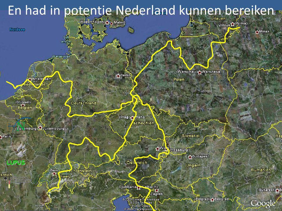 LUPUS En had in potentie Nederland kunnen bereiken