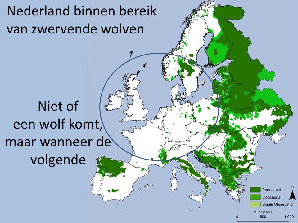 Niet of een wolf komt, maar wanneer de volgende Nederland binnen bereik van zwervende wolven