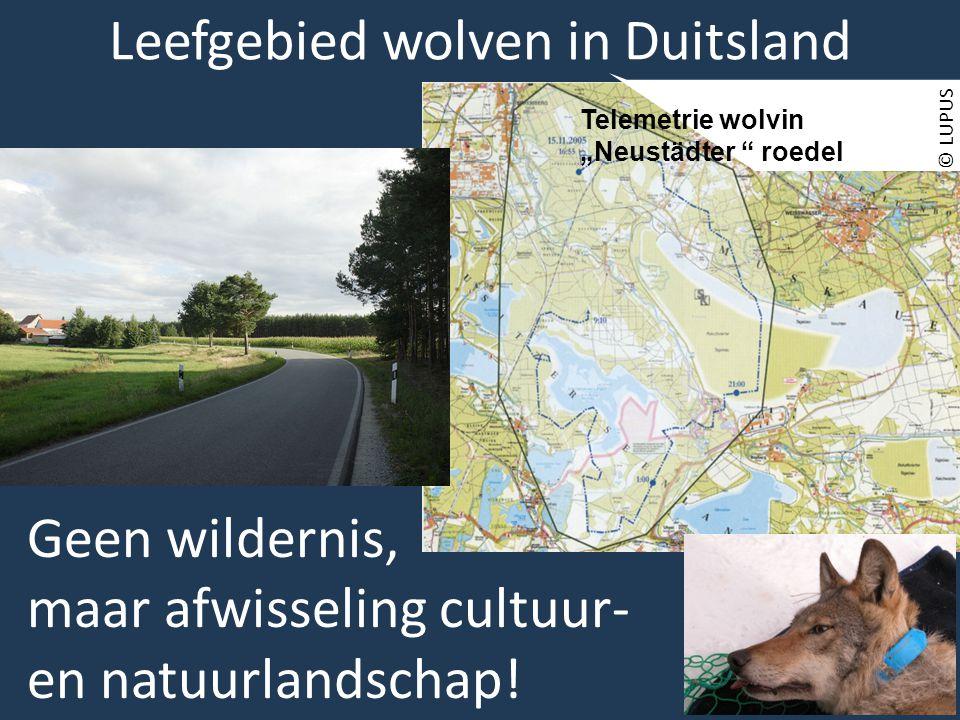 """© LUPUS Telemetrie wolvin """"Neustädter roedel Geen wildernis, maar afwisseling cultuur- en natuurlandschap."""