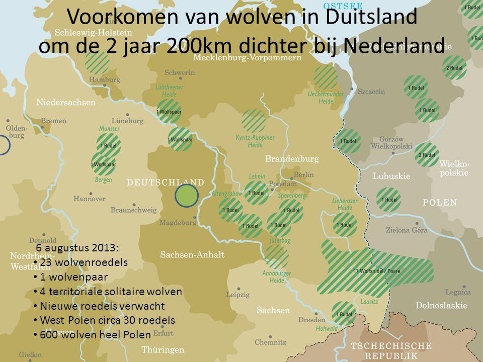 Voorkomen van wolven in Duitsland om de 2 jaar 200km dichter bij Nederland 6 augustus 2013: • 23 wolvenroedels • 1 wolvenpaar • 4 territoriale solitaire wolven • Nieuwe roedels verwacht • West Polen circa 30 roedels • 600 wolven heel Polen