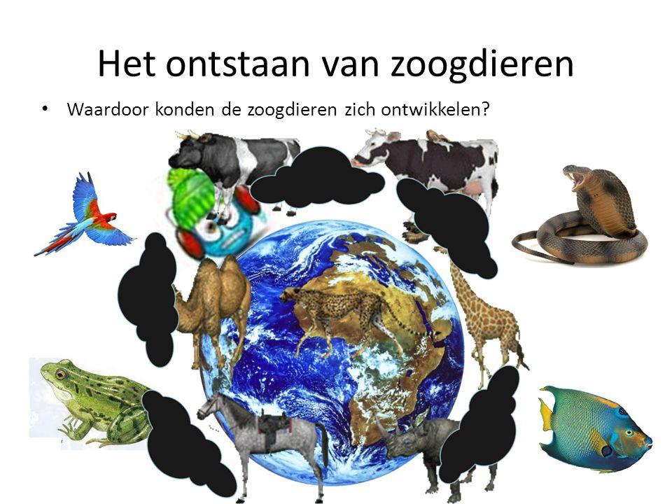Het ontstaan van zoogdieren • Waardoor konden de zoogdieren zich ontwikkelen?
