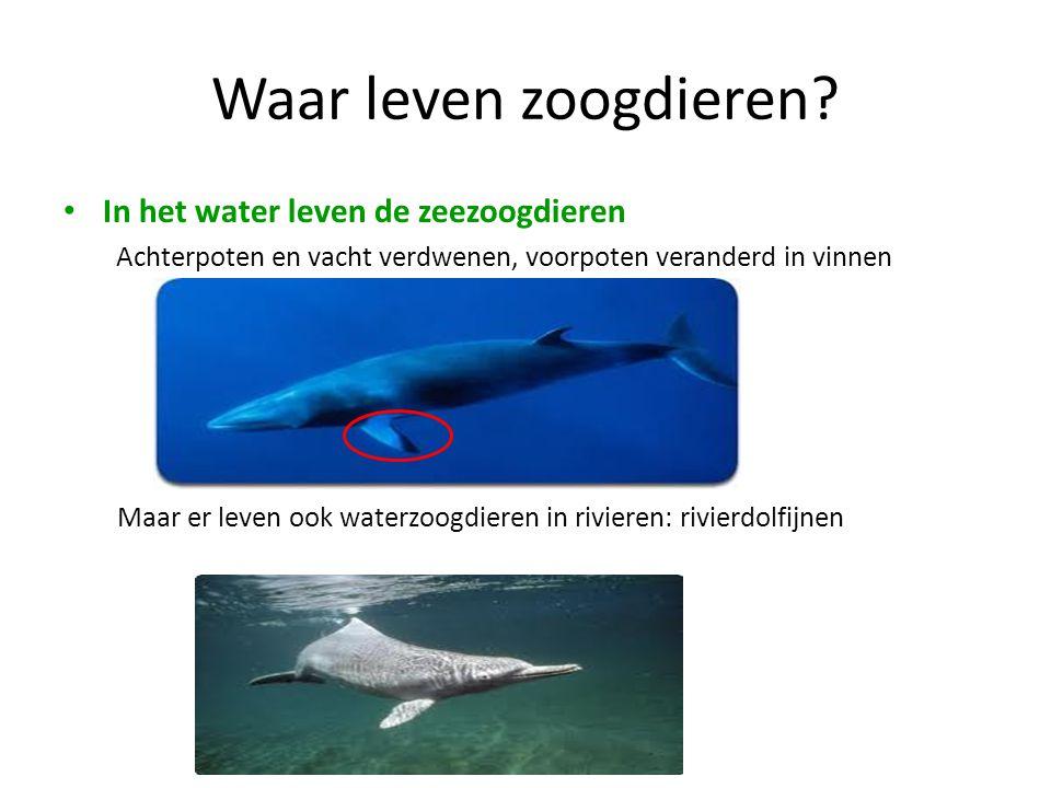 Waar leven zoogdieren? • In het water leven de zeezoogdieren Achterpoten en vacht verdwenen, voorpoten veranderd in vinnen Maar er leven ook waterzoog