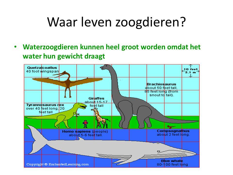 Waar leven zoogdieren? • Waterzoogdieren kunnen heel groot worden omdat het water hun gewicht draagt