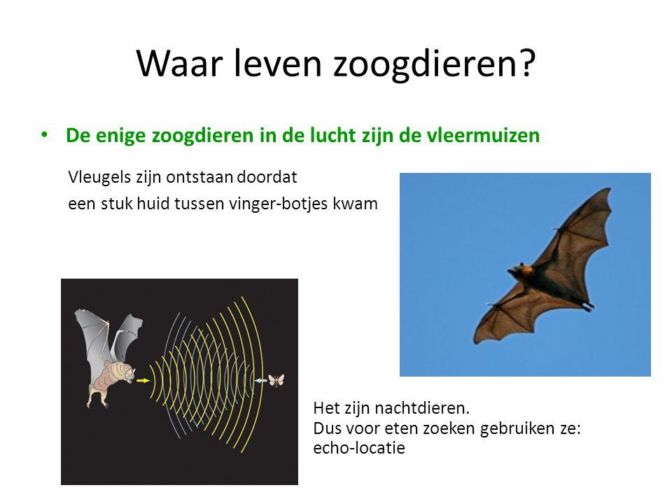 Waar leven zoogdieren? • De enige zoogdieren in de lucht zijn de vleermuizen Vleugels zijn ontstaan doordat een stuk huid tussen vinger-botjes kwam He