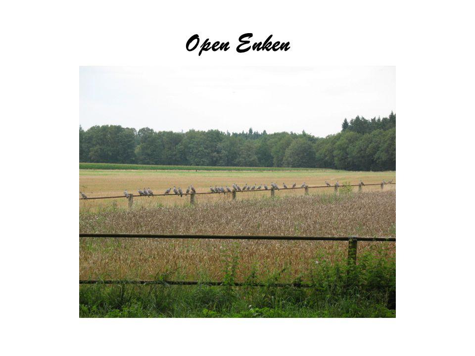Open Enken