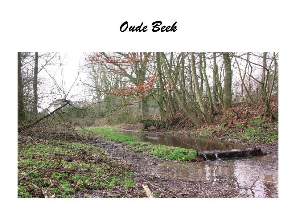 Oude Beek