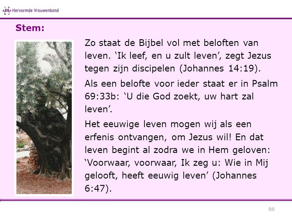 Zo staat de Bijbel vol met beloften van leven. 'Ik leef, en u zult leven', zegt Jezus tegen zijn discipelen (Johannes 14:19). Als een belofte voor ied