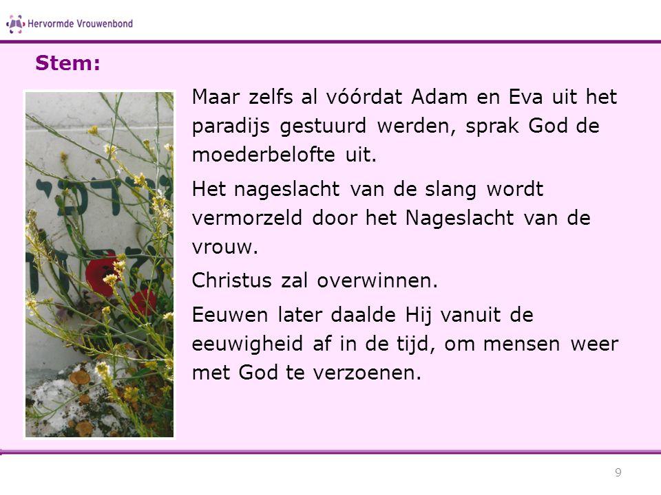 Maar zelfs al vóórdat Adam en Eva uit het paradijs gestuurd werden, sprak God de moederbelofte uit. Het nageslacht van de slang wordt vermorzeld door