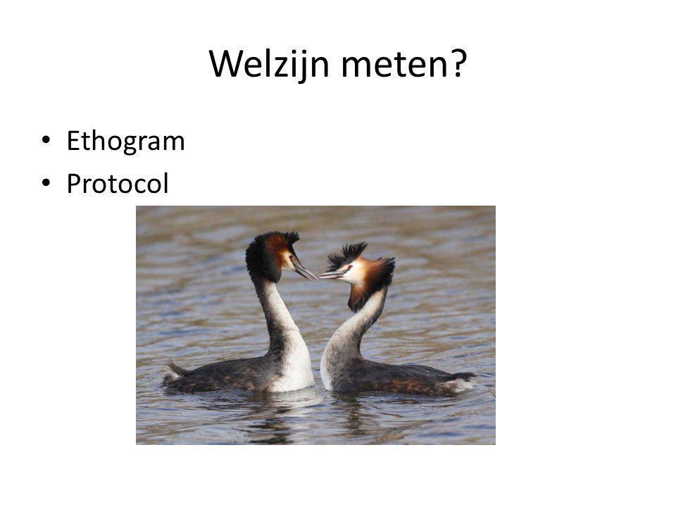 Welzijn meten? • Ethogram • Protocol