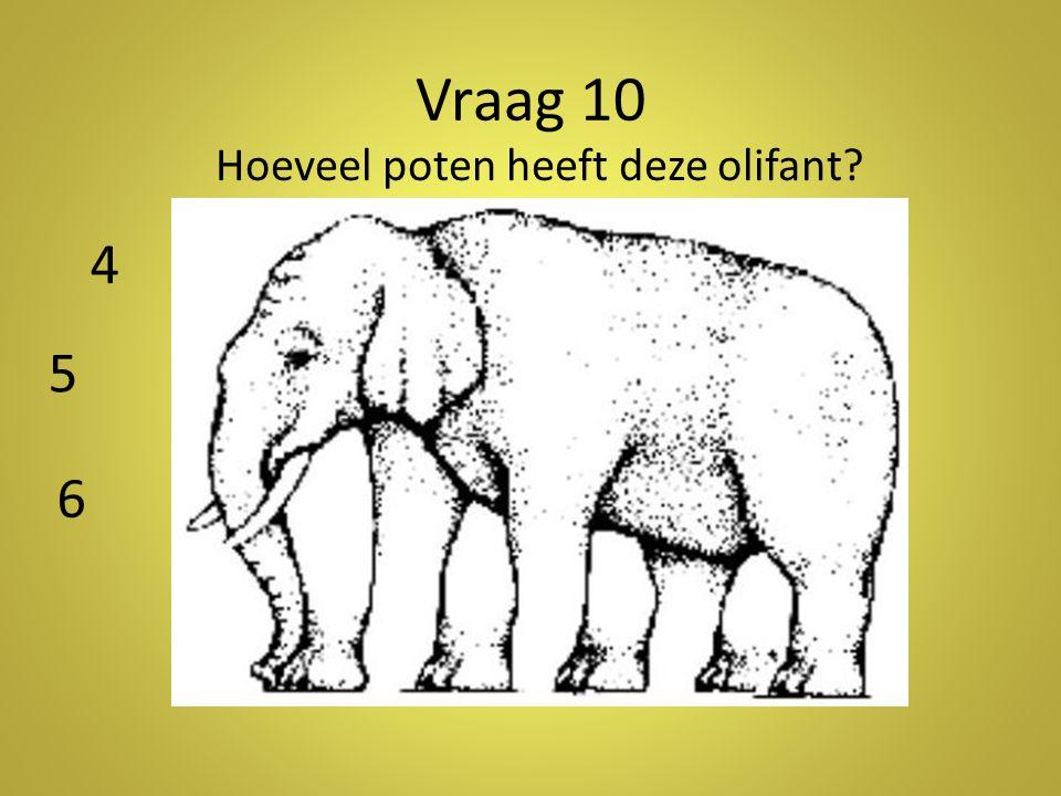Vraag 10 Hoeveel poten heeft deze olifant? 4 5 6