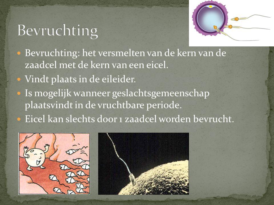  Bevruchting: het versmelten van de kern van de zaadcel met de kern van een eicel.  Vindt plaats in de eileider.  Is mogelijk wanneer geslachtsgeme