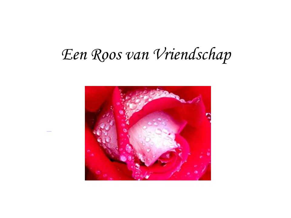 Een Roos van Vriendschap