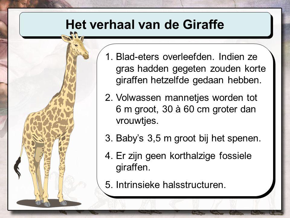 Waarom is een giraffe een giraffe De structuren in de giraffe-hals, zowel als de lichaamsstructuren van elk levend wezen, zijn aanwezig omdat het DNA de informatie bevat die nodig is om ze daar te zetten.