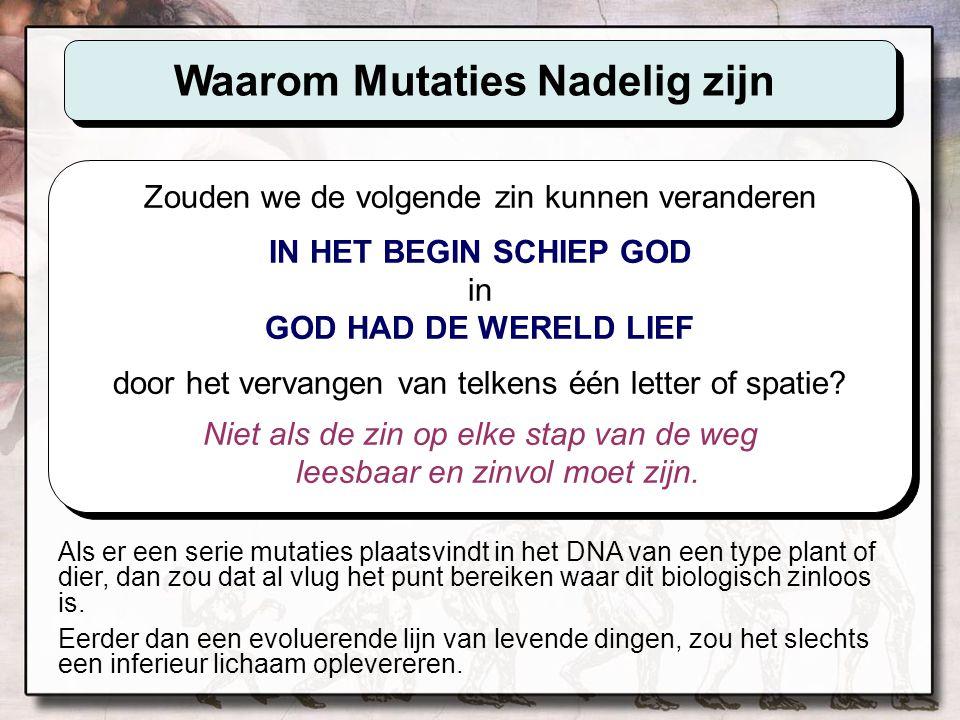 Sikkelcelanemie Normaal menselijk DNA bevat de instructies om rode- bloedlichaampjes te produceren die er ongeveer uitzien als 'doughnuts' met een plat middenste i.p.v.
