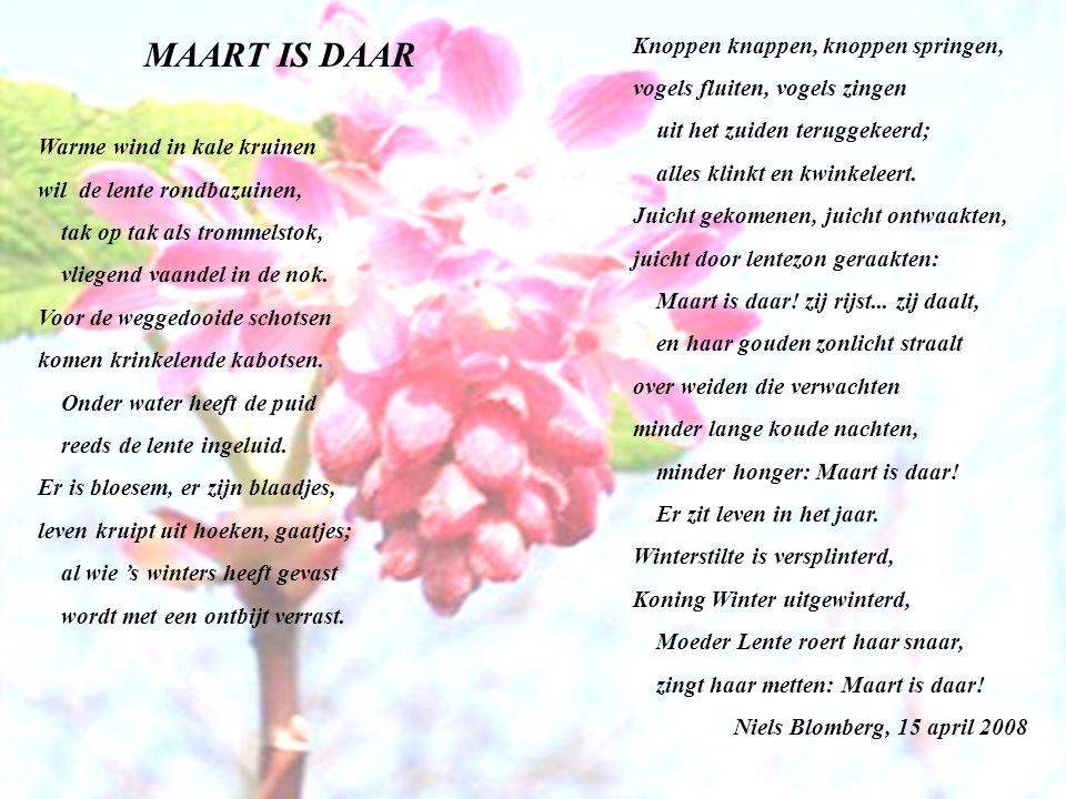 MAART IS DAAR Warme wind in kale kruinen wil de lente rondbazuinen, tak op tak als trommelstok, vliegend vaandel in de nok.