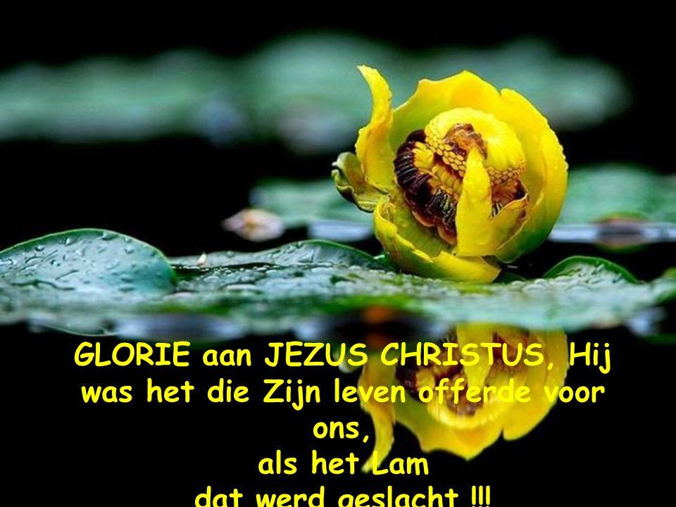 zo lief heeft God jou, dat Hij Zijn eniggeboren Zoon, Jezus Christus gezonden heeft opdat je in Hem zou geloven en niet verloren zult gaan.