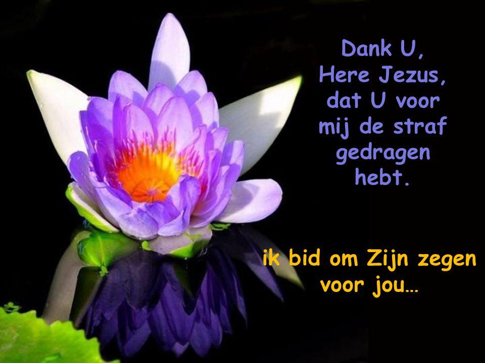 GLORIE aan JEZUS CHRISTUS, Hij was het die Zijn leven offerde voor ons, als het Lam dat werd geslacht !!!