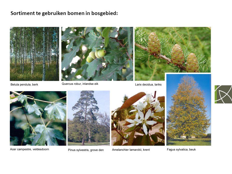 Sortiment te gebruiken bomen in bosgebied: