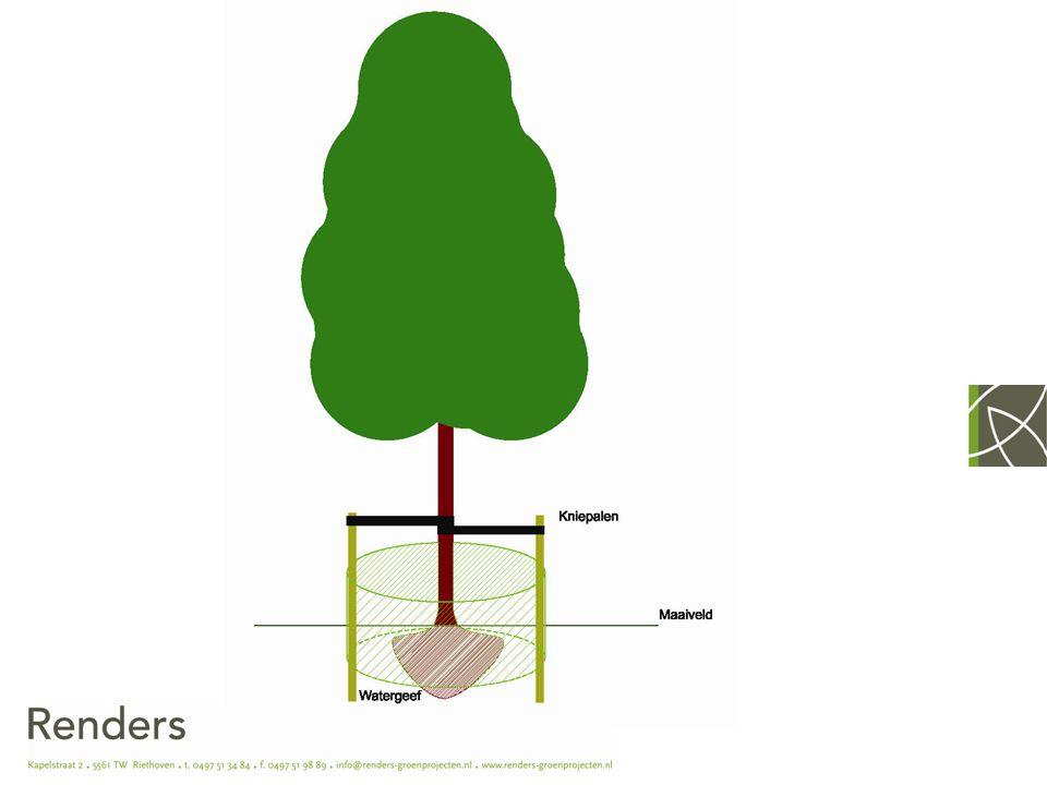 Folder nazorg Bij aanplant van een boom wordt een folder meegeleverd waarin een onderhoudsadvies staat: - Hoeveelheid water - Wel of niet snoeien - Gewasbescherming - wanneer - hoe - waarmee