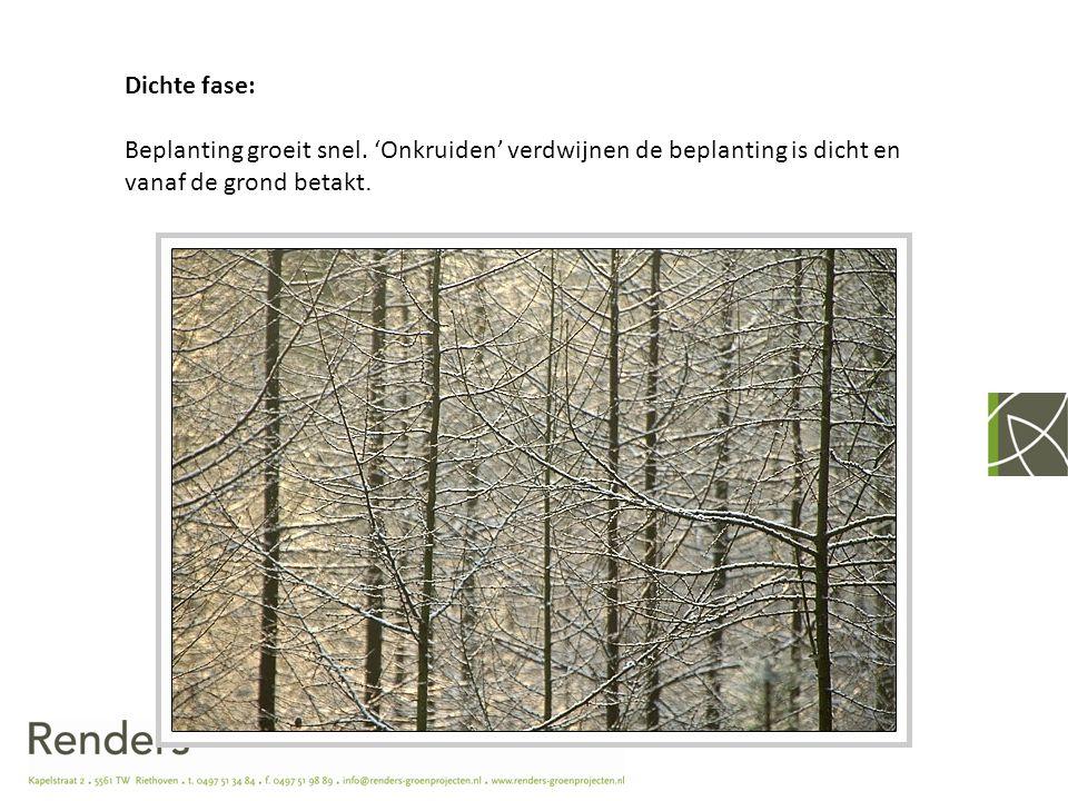 Staken fase: Bomen maken voornamelijk lengtegroei in de strijd om het meeste licht.