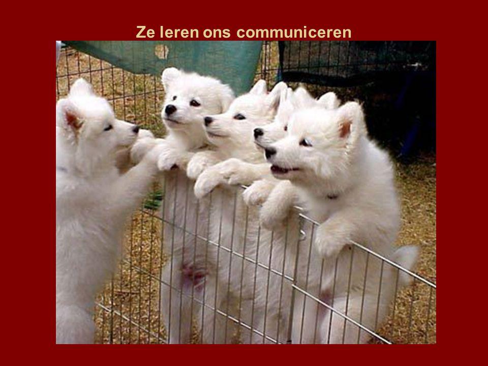 Ze leren ons communiceren