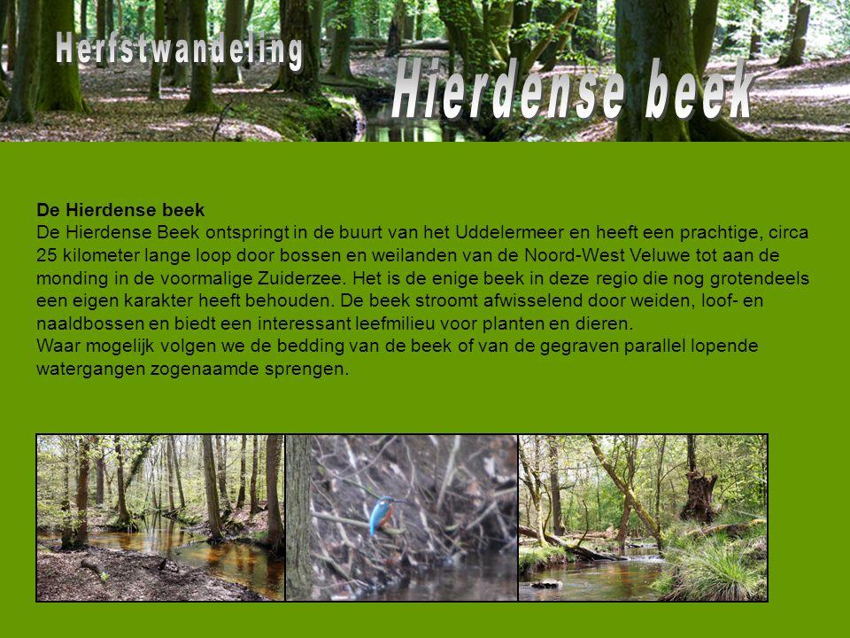 De Hierdense beek De Hierdense Beek ontspringt in de buurt van het Uddelermeer en heeft een prachtige, circa 25 kilometer lange loop door bossen en we
