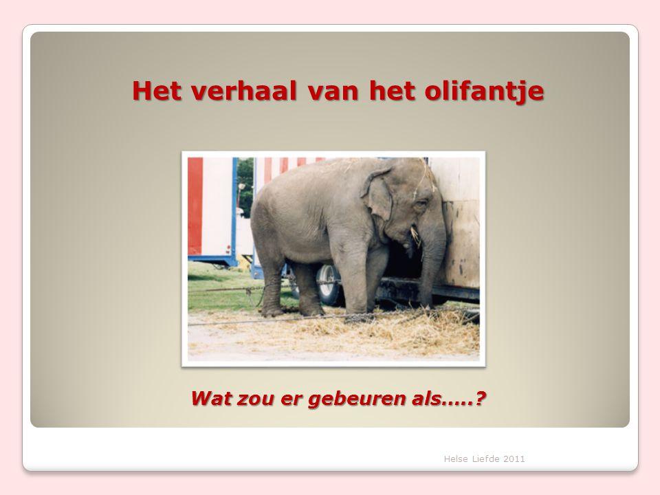Het verhaal van het olifantje Wat zou er gebeuren als…..?