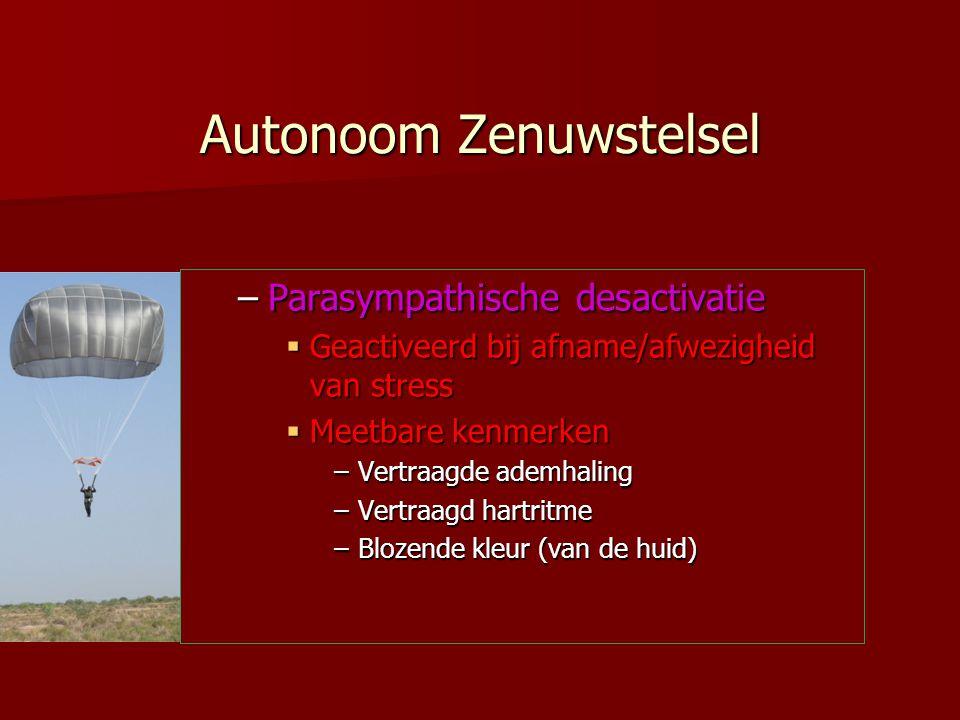 Autonoom Zenuwstelsel –Parasympathische desactivatie  Geactiveerd bij afname/afwezigheid van stress  Meetbare kenmerken –Vertraagde ademhaling –Vert