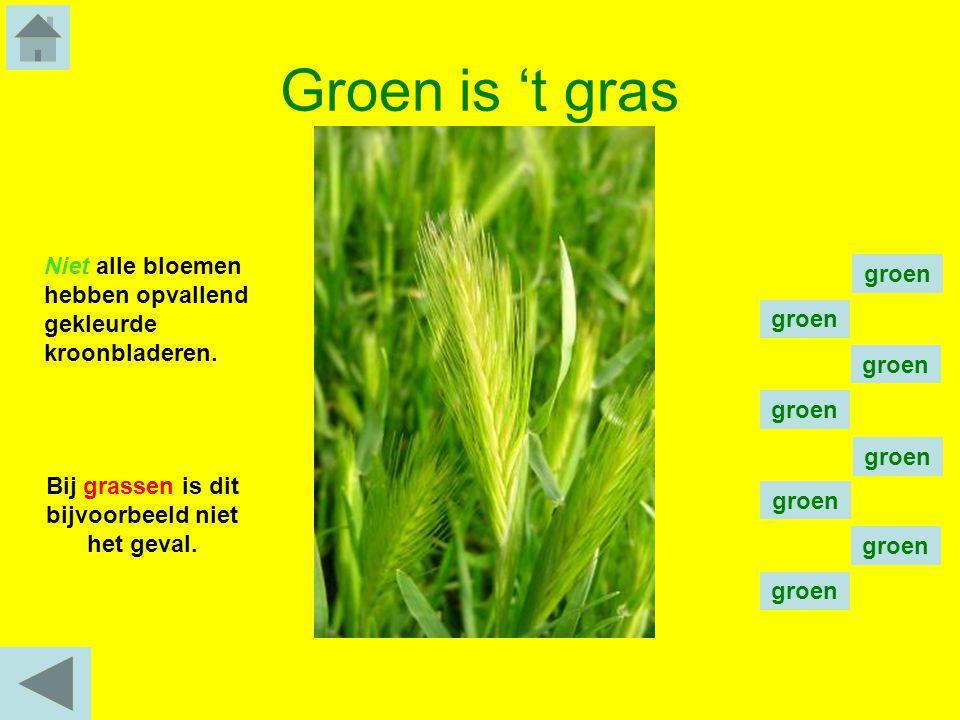 Groen is 't gras Niet alle bloemen hebben opvallend gekleurde kroonbladeren. Bij grassen is dit bijvoorbeeld niet het geval. groen