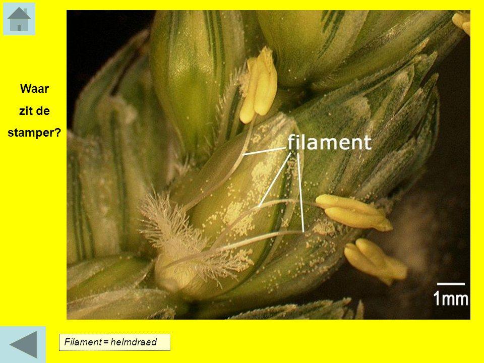 Filament = helmdraad Waar zit de stamper?