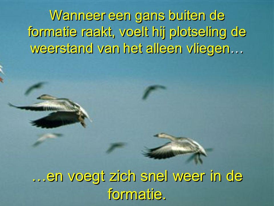 Elke vogel die met zijn vleugels wappert, zorgt voor een opwaartse kracht voor de vogel die volgt.
