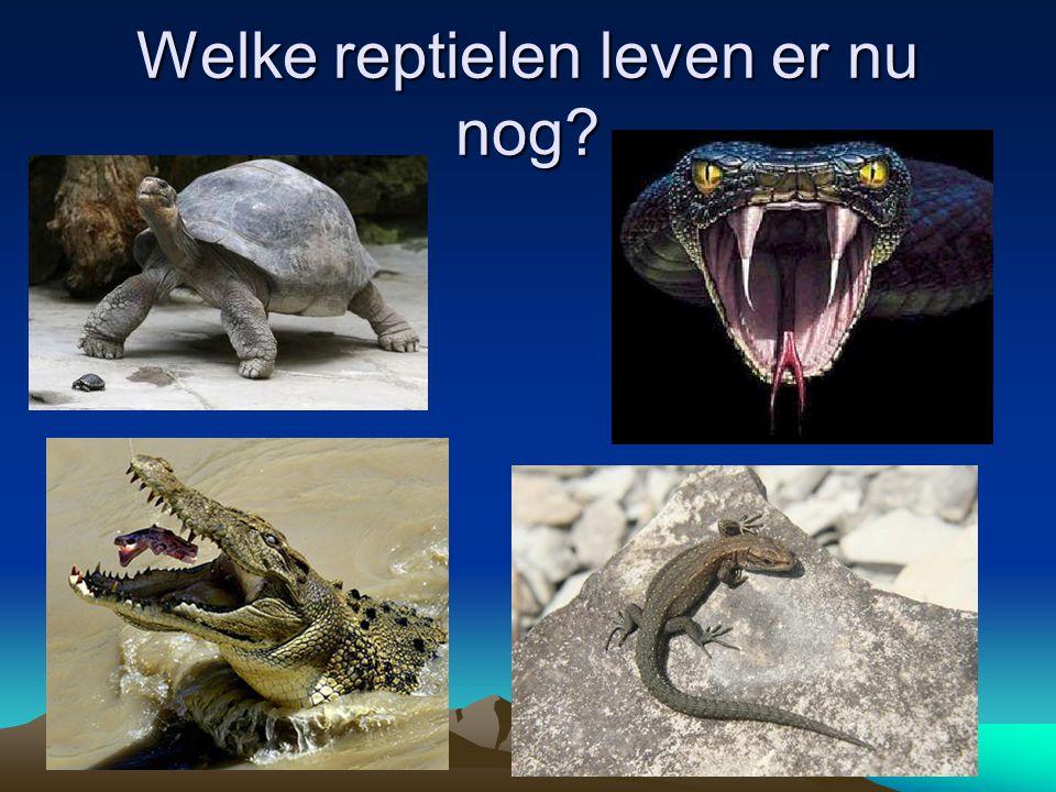 Welke reptielen leven er nu nog?
