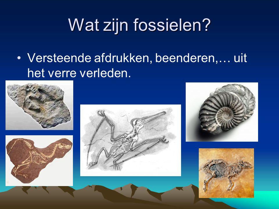 Wat zijn fossielen? •Versteende afdrukken, beenderen,… uit het verre verleden.