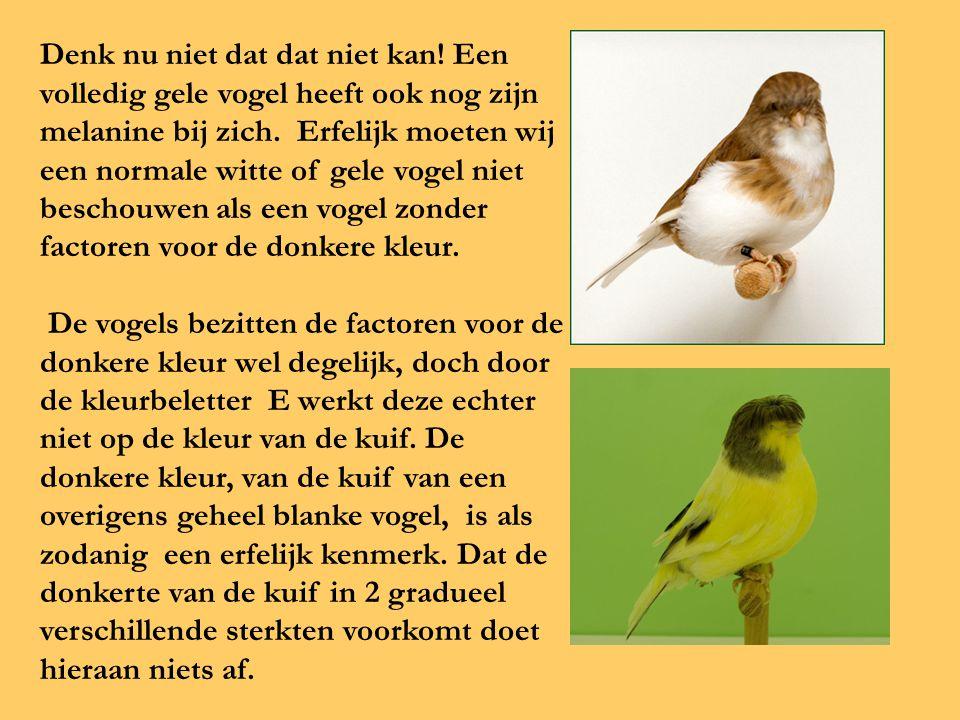 Denk nu niet dat dat niet kan! Een volledig gele vogel heeft ook nog zijn melanine bij zich. Erfelijk moeten wij een normale witte of gele vogel niet