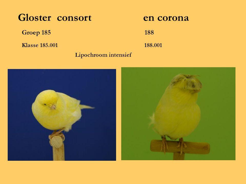 Gloster consort en corona Groep 185 188 Klasse 185.001 188.001 Lipochroom intensief