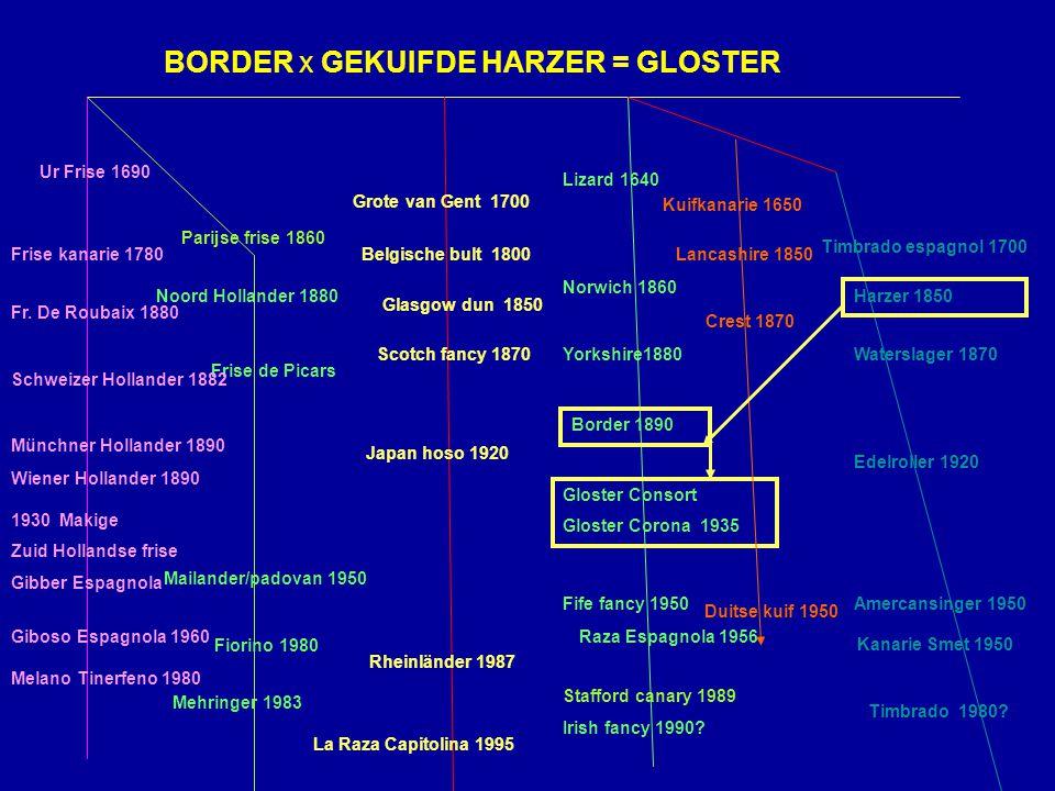 We hebben het gehad over: Gloster corona & consort Vererving Klasse verdeling Gebruikte literatuur: Martin Weijling N.J.