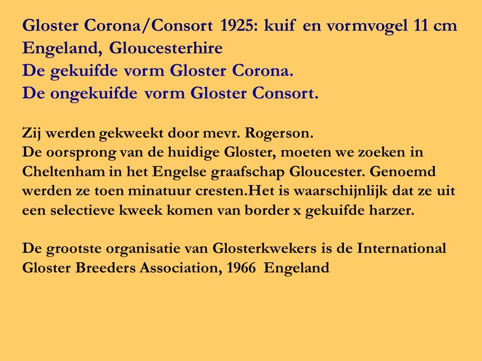 Gloster Corona/Consort 1925: kuif en vormvogel 11 cm Engeland, Gloucesterhire De gekuifde vorm Gloster Corona. De ongekuifde vorm Gloster Consort. Zij