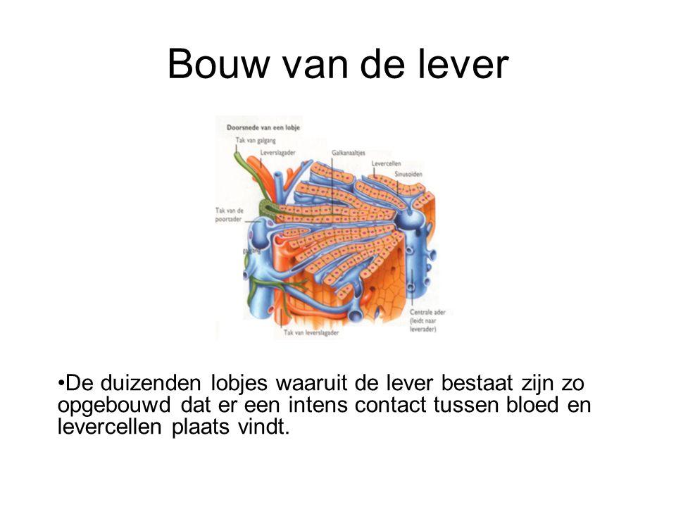 Bouw van de lever •De duizenden lobjes waaruit de lever bestaat zijn zo opgebouwd dat er een intens contact tussen bloed en levercellen plaats vindt.