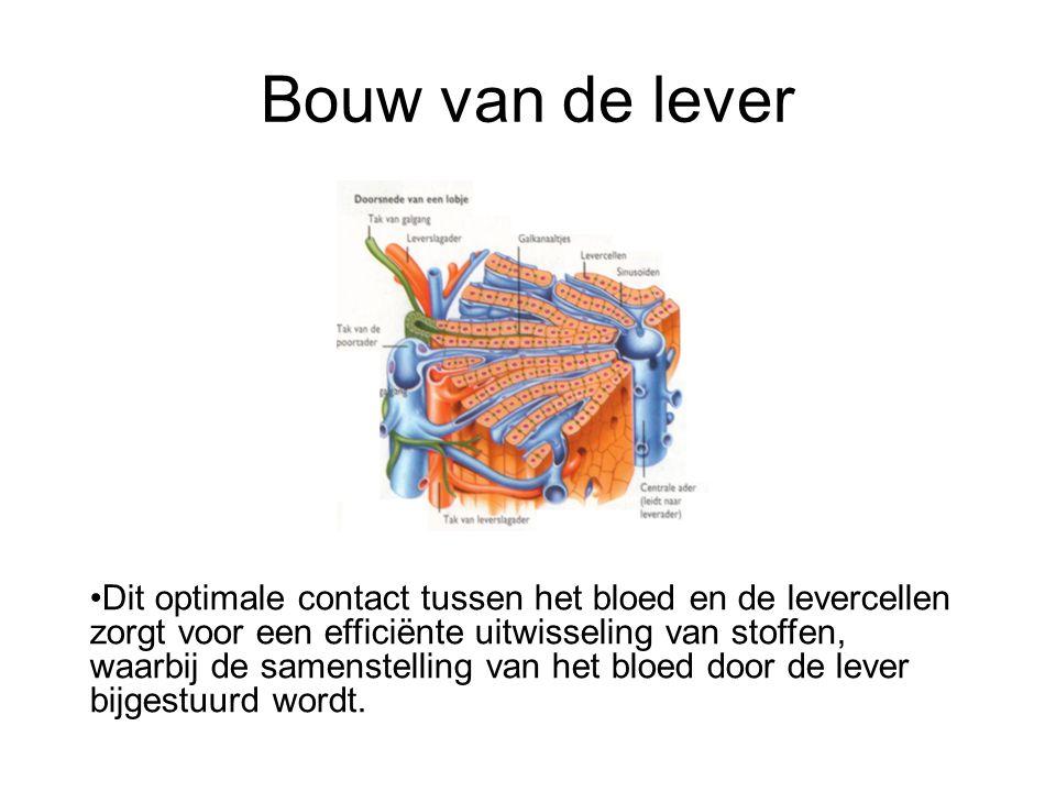 Bouw van de lever •Dit optimale contact tussen het bloed en de levercellen zorgt voor een efficiënte uitwisseling van stoffen, waarbij de samenstellin